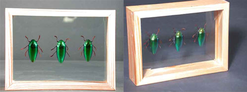 Green Beetles (Three) In Double Glass