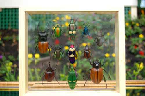 Large Insect Collection Framed Double Glass