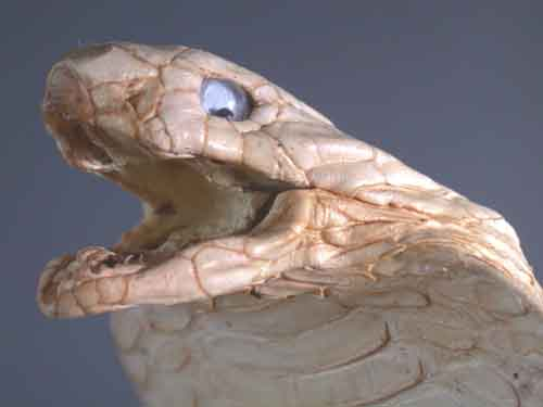 Huge Thai Cobra Taxidermy - Very Rare Limited