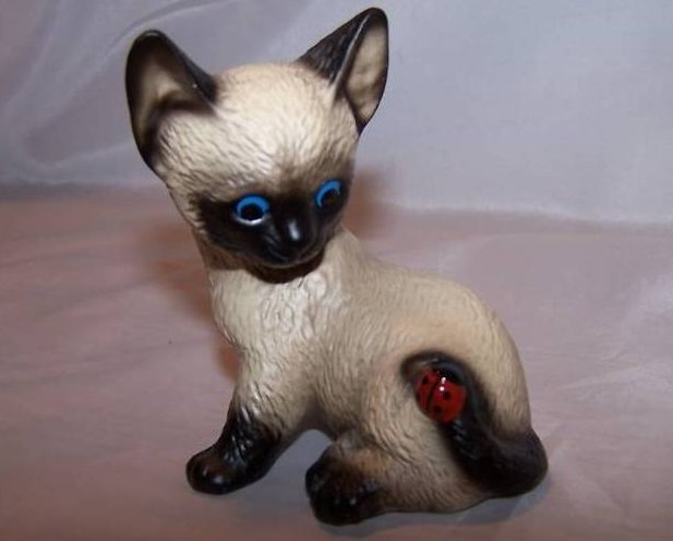 Harvey Knox Shocked Siamese Kitten Kitty Cat, Ladybug