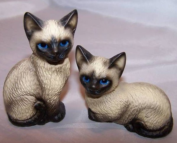 Havery Knox Two Siamese Kittens Kitties Cats