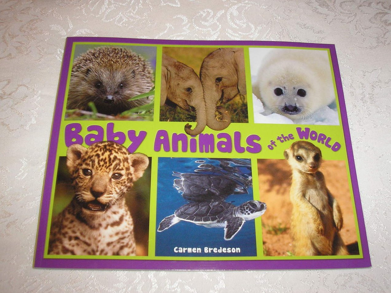 Baby Animals of the World Carmen Bredeson brand new science sc