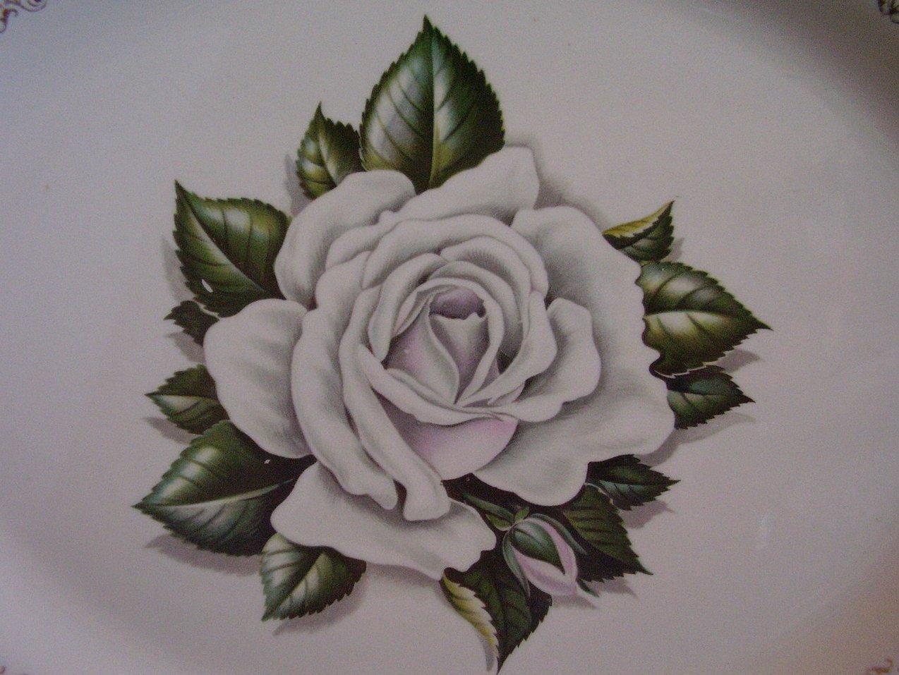 '.Laughlin Windsor White Rose .'