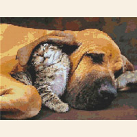 Bloodhound Dog With Best Friend Kitten
