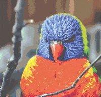 Blue Faced Lorikeet Parrot Bird Cross Stitch Pattern