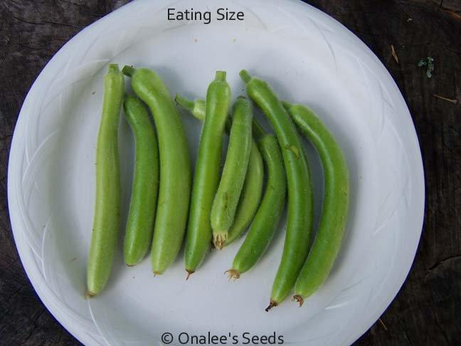 Image 0 of Cucuzzi (Lagenaria siceraria) Seeds / Italian Edible Gourd/Squash