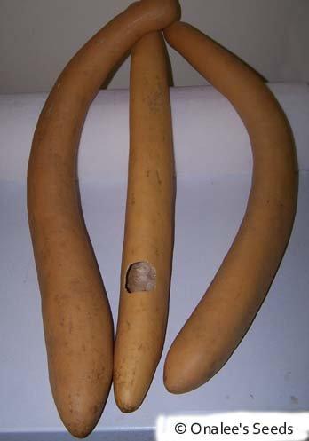 Image 1 of Cucuzzi (Lagenaria siceraria) Seeds / Italian Edible Gourd/Squash