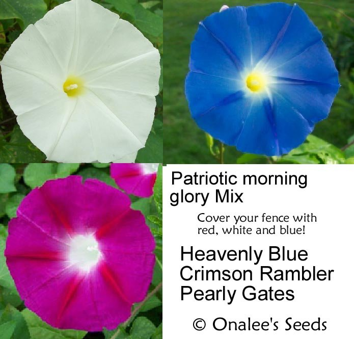 Patriotic Morning Glory Mix: Red, White and Blue! Ipomoea Seed