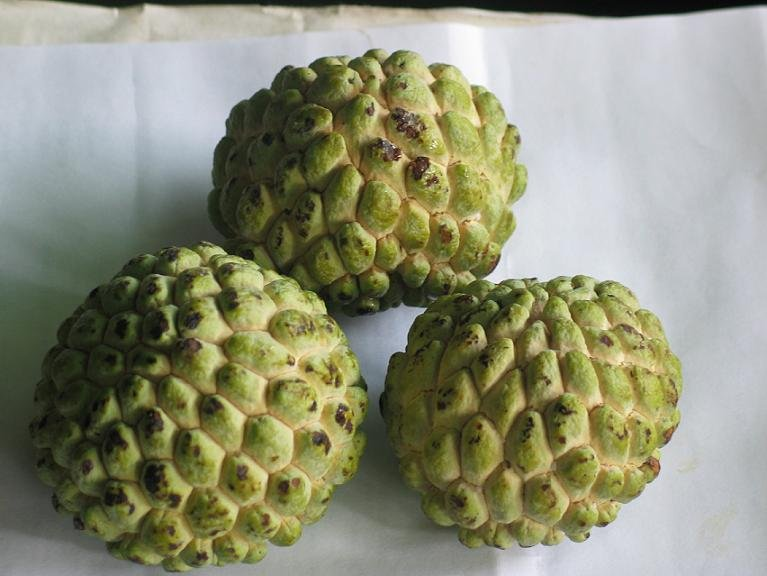 TROPICAL FRUIT TREES - Annona squamosa - Annona squamosa ...