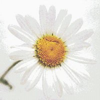 Lazy Daisy Flower Cross Stitch Pattern
