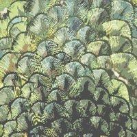 Peacock Feathers Cross Stitch Pattern