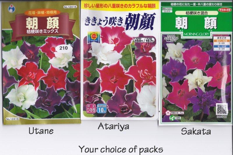 Japanese Morning Glory Seeds: Kikyouzaki Mix, Platycodon / Picotee Mix