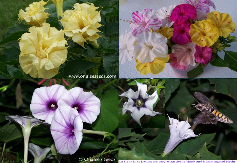 Night Garden Collection - COLORFUL - Night Blooming Flowers, 4 Packs!