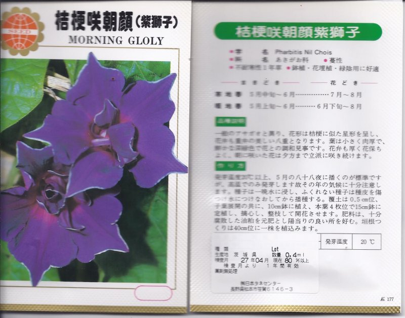 Image 1 of Japanese Morning Glory Seeds: Kikyouzaki Murasaki (Purple), Platycodon