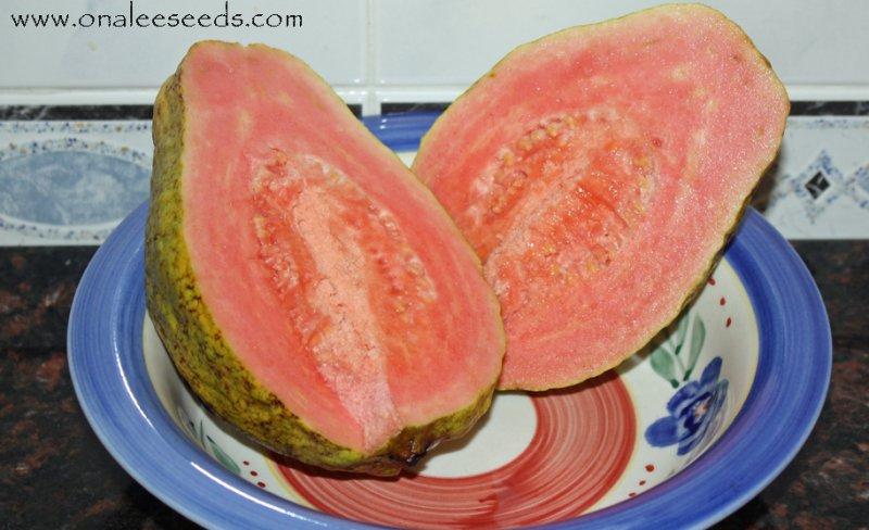 Florida Native Red (Dark Pink) Tropical Guava Fruit Tree Seeds (Psidium guajava)