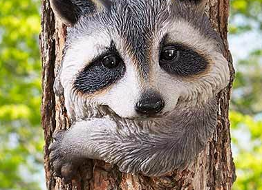 Image 3 of Raccoon Tree Hugger