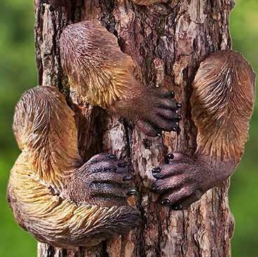 Image 1 of Fox Tree Hugger