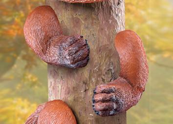 Image 2 of Woodland Fox Tree Hugger