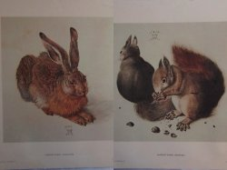 Albrecht Durer Prints: Young Hare and Squirrels Lithographs