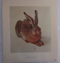 '.Young Hare by Albrecht Durer.'