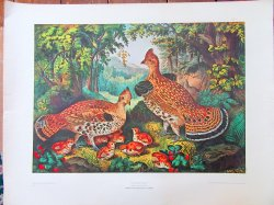 Currier and Ives Lithograph The Happy Family Ruffed Grouse and Young 22 x 28