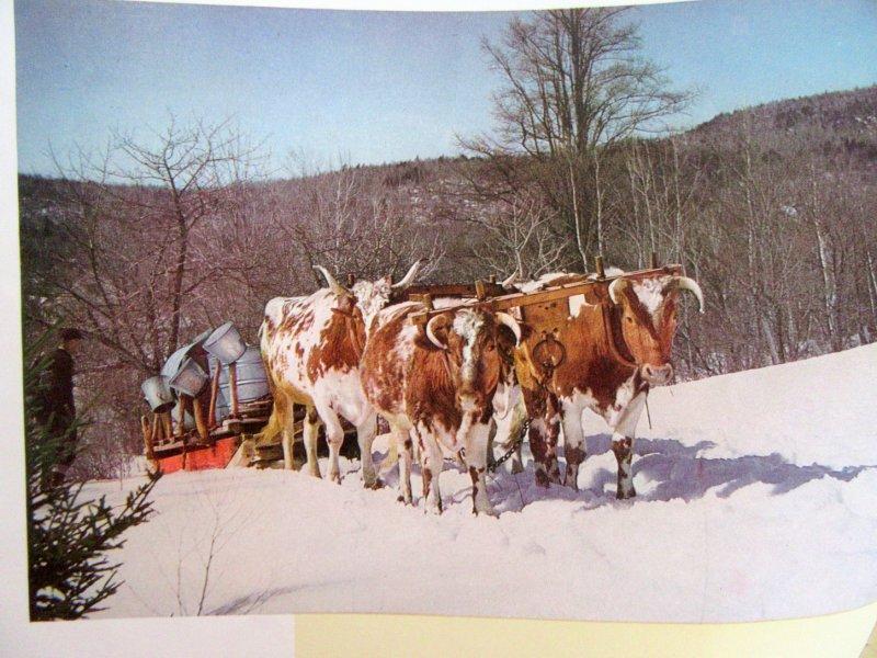 Image 3 of This is New Hampshire 1945 Photographic Tourism Promo Magazine