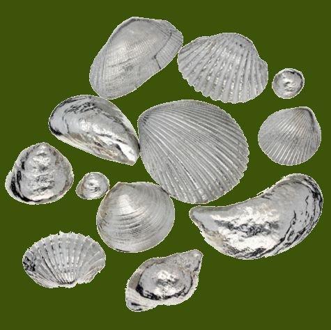 Image 0 of Memories From The Seaside Twelve Seashells Stylish Pewter Set