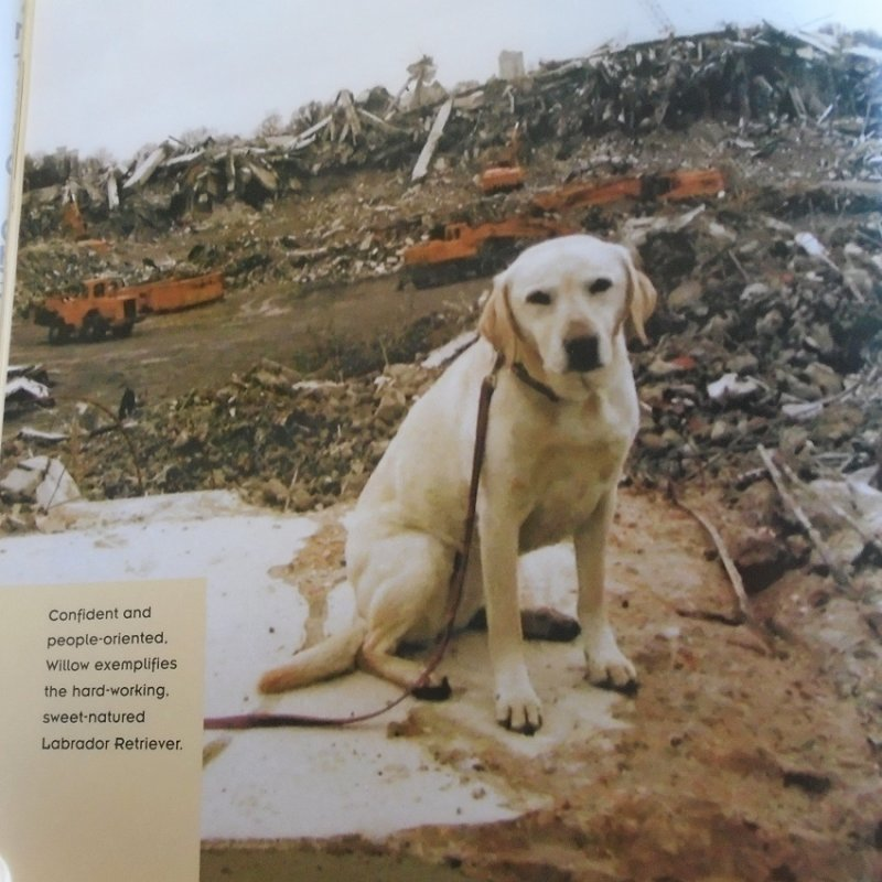 One of the Dog Heroes of September 11th. About dogs whose job was to search the Twin Towers ruble for victims.