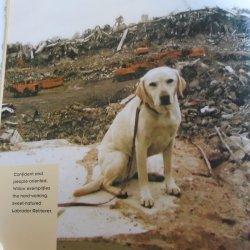 '.Twin Towers Dog Heroes.'