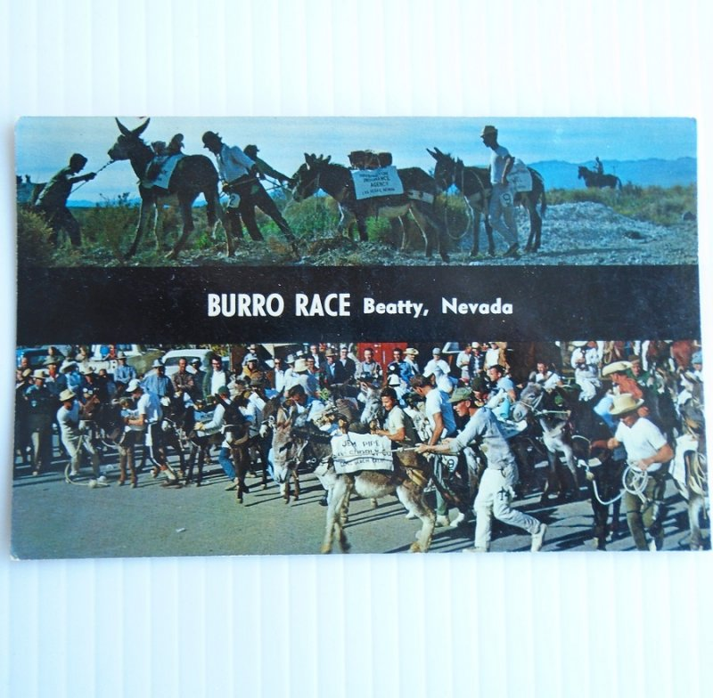 Beatty Nevada Burro Races Postcard. Vintage 1960s. Unused.