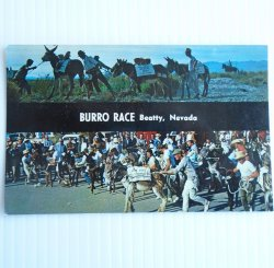 Burro Race Beatty Nevada, 1960s, Unused Postcard