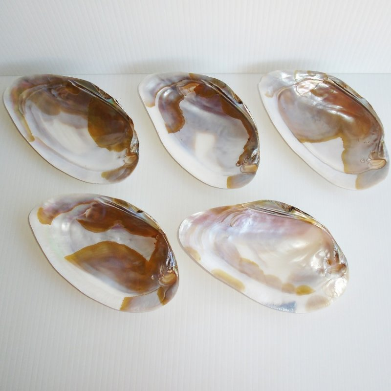 Circa 1940s - 1950s Clam, Oyster, or Mother of Pearl side dishes. Large size, 6.5 by 3.5 inch average. Estate find.