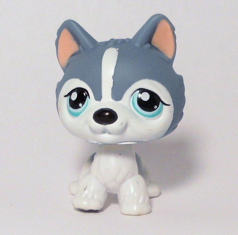 littlest pet shop husky - photo #3
