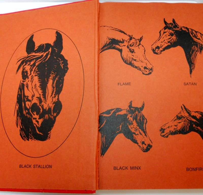 Black Stallion Book Cover : The black stallion series books pc lot by walter