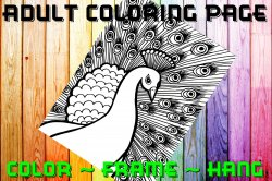 Peacock Adult Coloring Page Sheet #3 (digital or shipped)