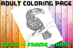 Toucan Adult Coloring Page Sheet #1 (digital or shipped)