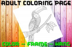 Toucan Adult Coloring Page Sheet #2 (digital or shipped)
