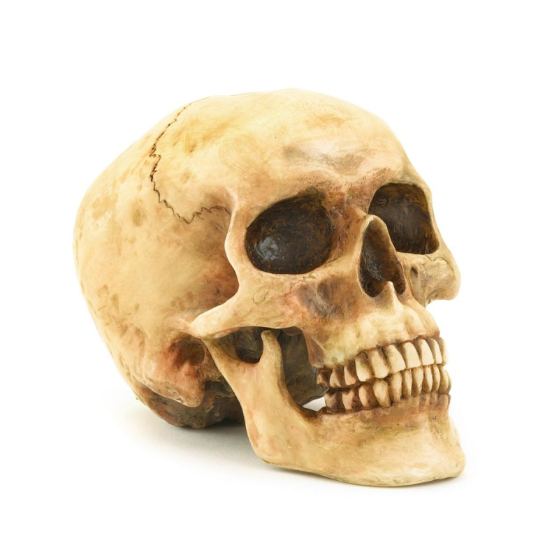 Image 1 of Realistic Grinning Skull
