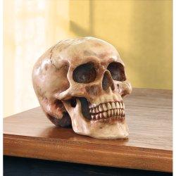 Realistic Grinning Skull