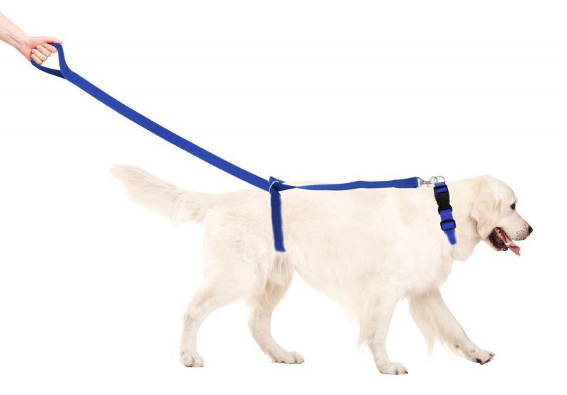 Image 6 of 3-Piece Reflective 6 Foot Dog Leash, 5 Foot Training Harness and Collar