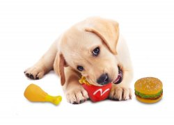 Set of 3 Hamburger, Fries & Drumstick Squeaky Toys for Dogs