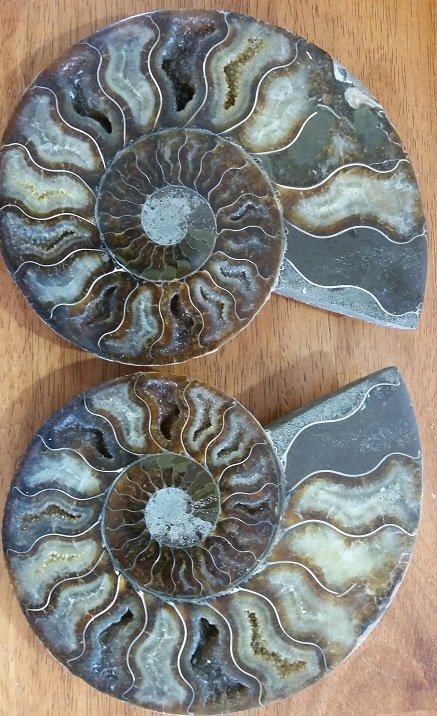 Image 0 of Ammonite Half