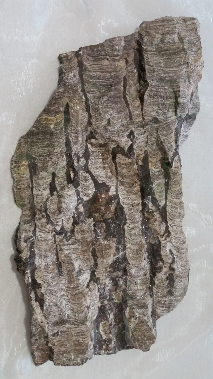 Image 1 of Stromatolite - Russia