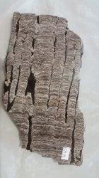 Stromatolite - Russia