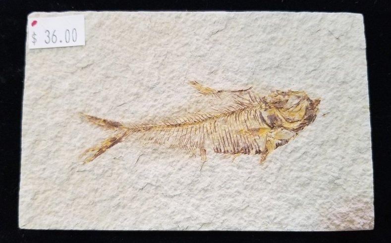 Image 0 of Fossil Fish - Diplomystus