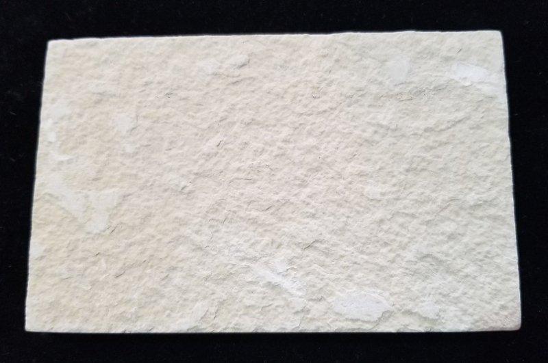 Image 2 of Fossil Fish - Diplomystus