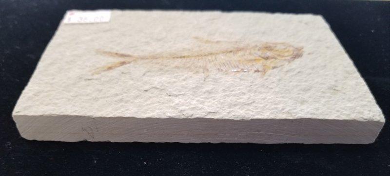 Image 1 of Fossil Fish - Dyplomystus