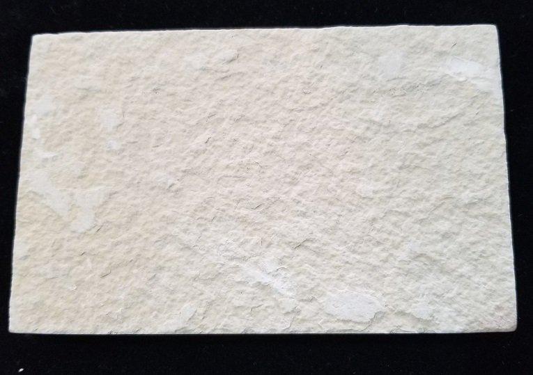 Image 2 of Fossil Fish - Dyplomystus