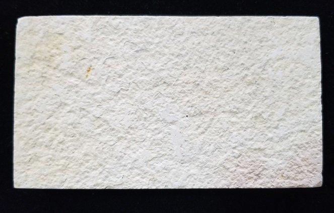 Image 1 of Fossil Fish - Knightia