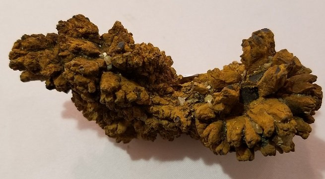 Image 1 of Coprolite